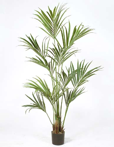 Kentia Palm W Pot 180 cm Green 4175GRN